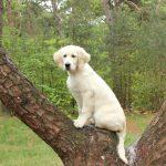 Dyonne als pup