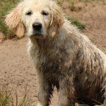 Puppy Dyonne, kleine smeerpoets!