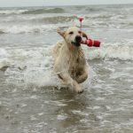 Dyonne geniet van de zee!