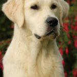 Kaidyn als jonge hond