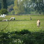 Kleine Lucan heel stoer achter de ganzen aan :-)