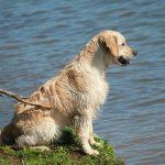 Lucan als jonge hond bij de waterkant