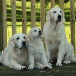 3 generaties: oma Yacime, kleindochter Kaidyn, mama Skylar