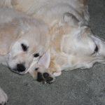 Puppy Kaidyn en tante Venice