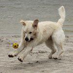 Roman heeft plezier met de bal!