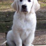 Roman als pup