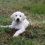 Puppy Roman