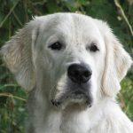 Roman als jonge hond