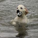 Skylar als pup, toen al een waterrat!