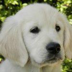 Skylar als pup