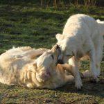 Dyonne en tante Skylar, ze kunnen toch zo leuk spelen samen!