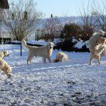 Sneeuwpret in de tuin!