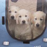 In de puppykar: Roman, Milan en Venice