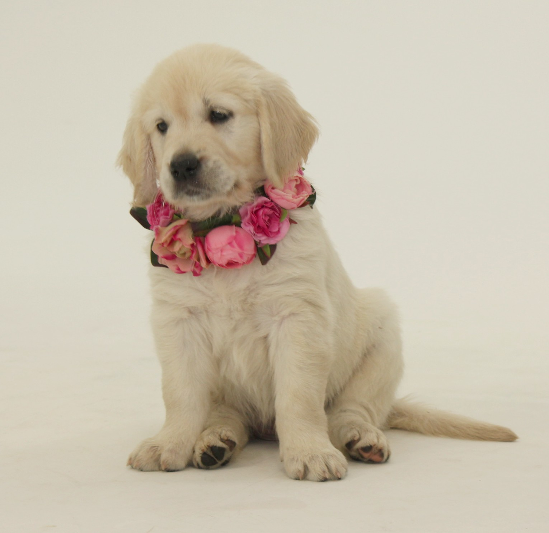 pupje 'roze': Luna (Rocksett Kimmeridge Bay)
