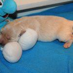 Teefje 'roze' ligt lekker te slapen op de Smurf