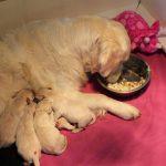 Skylar nuttigt haar maaltijden nu nog het liefst bij haar kroost