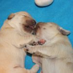 De kussende zussen (teefje 'roze' en teefje 'paars')