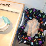 Het ochtend-schoonmaakritueel; een lege werpkist en de pupjes eventjes in de wasmand