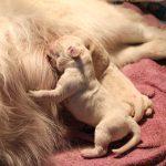En ook het eerste meiske is geboren (rechts): teefje 'roze'