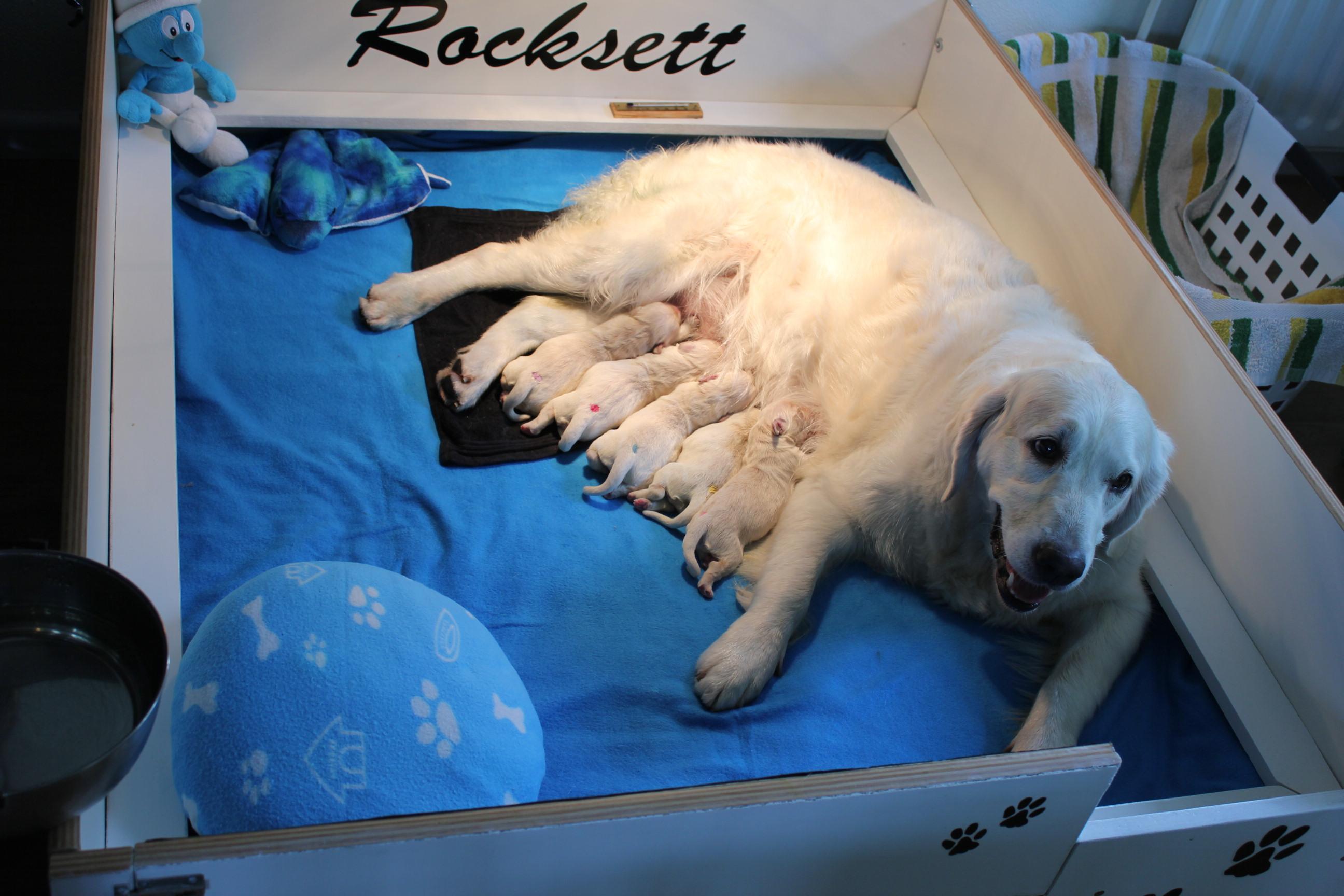 geboortedag: en daar ligt het prachtige vijftal met hun trotse mama!