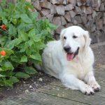 Mama Skylar heel even in de tuin, het was heerlijk weer vandaag!