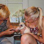 De nageltjes van de pups knippen, Ruby (studerend voor dierenarts) helpt mij daarbij