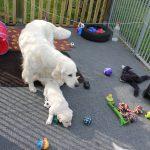 Mama vergezelt de pups bij hun eerste keer in de tuin