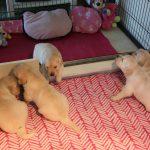 Teefje 'roze' lijkt haar broertje en zusjes te willen overtuigen dat het leuk is waar zij nu is ;-)