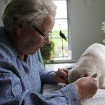 De pups krijgen vleespap en mijn moeder vindt het leuk daarbij te assisteren!