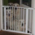 De volwassen honden zijn verontwaardigd, zij lusten dat lekkers ook wel!