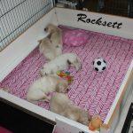 Een 'treintje' pups! Van onder naar boven: 'roze', 'geel', 'rood', 'blauw' en 'paars'