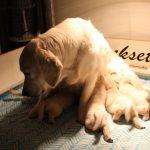 De eerste keer dat Skylar de pupjes zittend voedt!