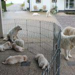 En zo hebben we momenteel maar liefst 11 honden!!