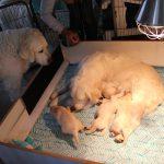 De pups krijgen weer bezoek: dit keer is het 'ome' Milan die even komt buurten
