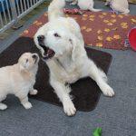 En de pups genieten er net zo van!