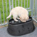 Iets om op te klimmen vinden de pups vaak ook boeiend, hier een omgekeerd kattenmandje