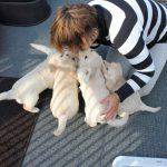 Mijn zus Irene bijna bedolven onder de pups!