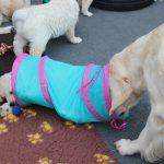 Dyonne speelt verstoppertje met één van de pups!