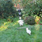 Tot slot op zondagochtend een wandelingetje door het 'bos' achter in onze tuin
