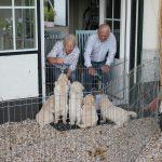 Het zonnetje schijnt maar de wind is guur; dan maar BINNEN zitten om naar de pups te kijken die liever BUITEN zijn!