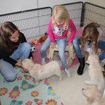 Socialisatie: drie jongedames op bezoek, de pups vonden het gewéldig (en de kindjes ook!)