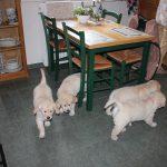 Socialisatie en gewoon gezellig: bij mijn zus in de keuken
