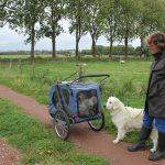 Socialisatie: langs de schapen en de koeien