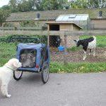 Socialisatie: nog even gauw bij de geit kijken en dan lekker naar huis!