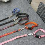 Socialisatie: op vrijdag even de tijd genomen om de hondjes het wandelen aan de riem te leren