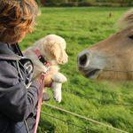 Meteen even kennismaken met de paarden, deze zijn altijd heel vriendelijk