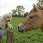 En ook hier geen angst voor het paard!