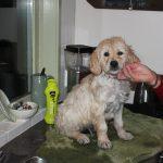 Later op de avond alle pupjes gewassen