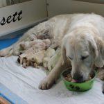 De eerste dag na de bevalling is het voornamelijk licht verteerbaar voedsel, Skylar smult er van!