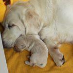 Reutje 'geel' ligt hier zó lief tegen zijn mama aan!